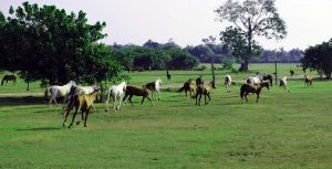 Abraka Turf Horses